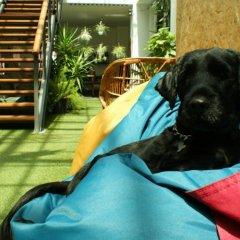 Lisbon Destination Hostel с домашними животными