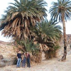 Отель Madaba Private Home Experience – Fadi's Home Stay Иордания, Мадаба - отзывы, цены и фото номеров - забронировать отель Madaba Private Home Experience – Fadi's Home Stay онлайн пляж фото 2
