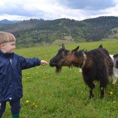 Гостиница Вилла Речка с домашними животными