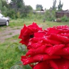 Отель Guest house Krasnii Zvetok Кыргызстан, Каракол - отзывы, цены и фото номеров - забронировать отель Guest house Krasnii Zvetok онлайн