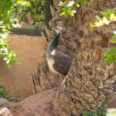 Отель Ecolodge - La Palmeraie Марокко, Уарзазат - отзывы, цены и фото номеров - забронировать отель Ecolodge - La Palmeraie онлайн фото 9