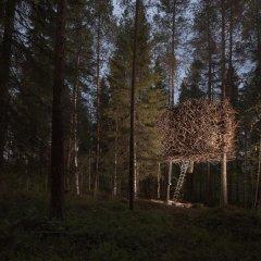 Tree Hotel фото 5