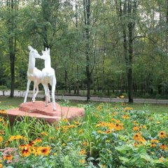 Санаторий Подмосковье УДП РФ с домашними животными