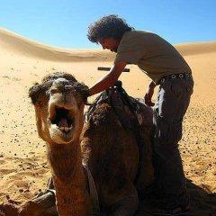 Отель Morocco Desert Trek Марокко, Мерзуга - отзывы, цены и фото номеров - забронировать отель Morocco Desert Trek онлайн с домашними животными