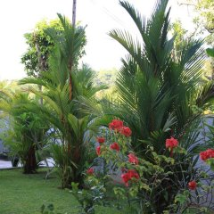 Апартаменты Coral Palm Villa and Apartment фото 8