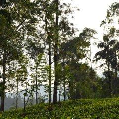 Отель Green Valley Holiday Inn Шри-Ланка, Бандаравела - отзывы, цены и фото номеров - забронировать отель Green Valley Holiday Inn онлайн приотельная территория фото 2