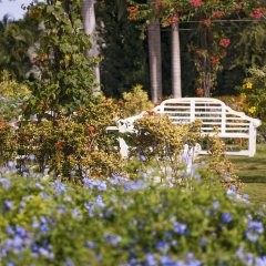 Отель Half Moon Ямайка, Монтего-Бей - отзывы, цены и фото номеров - забронировать отель Half Moon онлайн фото 4