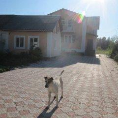Гостевой Дом в Ясной Поляне с домашними животными