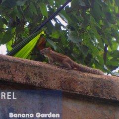 Отель Banana Garden