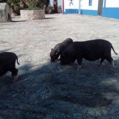 Отель Monte das Galhanas с домашними животными