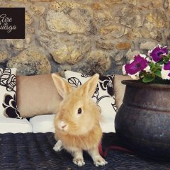 Отель Aire de Ruesga с домашними животными
