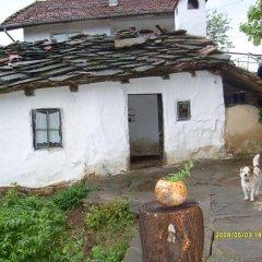 Отель Country House Dryanovo Боженци фото 3