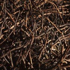 Tree Hotel 5* Стандартный номер с различными типами кроватей фото 11