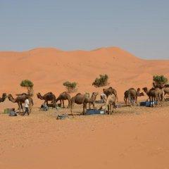 Отель Maroc Galacx Марокко, Уарзазат - отзывы, цены и фото номеров - забронировать отель Maroc Galacx онлайн пляж фото 2