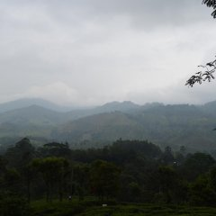 Отель Green Valley Holiday Inn Шри-Ланка, Бандаравела - отзывы, цены и фото номеров - забронировать отель Green Valley Holiday Inn онлайн фото 4
