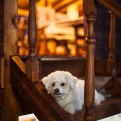 Отель Durazzo Resort & Spa с домашними животными