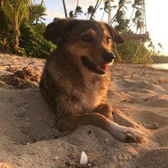 Отель Robinson Crusoe Island Фиджи, Вити-Леву - отзывы, цены и фото номеров - забронировать отель Robinson Crusoe Island онлайн с домашними животными