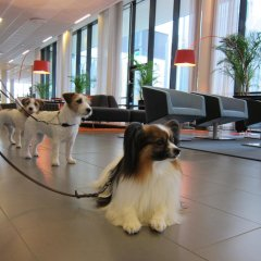 Отель Park Inn by Radisson Malmö с домашними животными