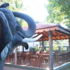Отель Sumal Villa Шри-Ланка, Берувела - отзывы, цены и фото номеров - забронировать отель Sumal Villa онлайн бассейн фото 2