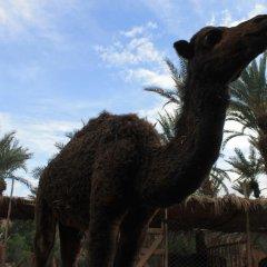 Отель Ecolodge Bab El Oued Maroc Oasis пляж фото 2