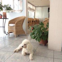 Отель Villa Mare Италия, Риччоне - отзывы, цены и фото номеров - забронировать отель Villa Mare онлайн с домашними животными