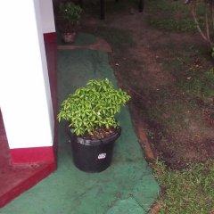Отель The Herb Garden фото 11