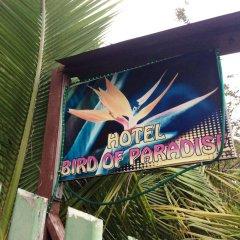 Отель Bird of Paradise Остров Утила бассейн