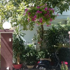 Отель Cat Vang Guesthouse