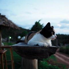 Отель Cat Bungalow Ланта с домашними животными
