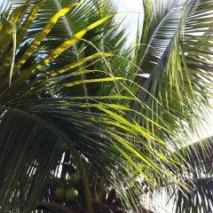 Отель Fare Suisse Tahiti Французская Полинезия, Папеэте - отзывы, цены и фото номеров - забронировать отель Fare Suisse Tahiti онлайн пляж фото 2