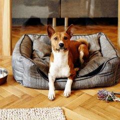 Апартаменты SleepWell Apartments Ordynacka с домашними животными