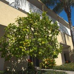 Отель Lemon Tree Inn 3* Номер Делюкс с различными типами кроватей фото 5