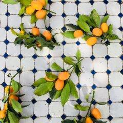 Отель La Villa Mandarine Марокко, Рабат - отзывы, цены и фото номеров - забронировать отель La Villa Mandarine онлайн фото 8