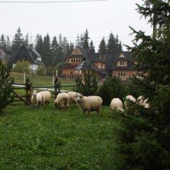 Отель Willa Frajda Закопане с домашними животными