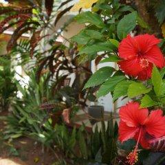 Отель The Tandem Guesthouse Шри-Ланка, Хиккадува - отзывы, цены и фото номеров - забронировать отель The Tandem Guesthouse онлайн