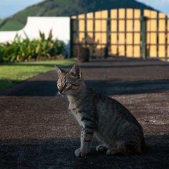 Отель Vila Belgica Португалия, Орта - отзывы, цены и фото номеров - забронировать отель Vila Belgica онлайн с домашними животными