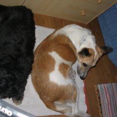 Отель Nagelehof Рачинес-Ратскингс с домашними животными