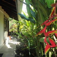 Отель Cabinas Tropicales Puerto Jimenez 3* Номер категории Эконом фото 10