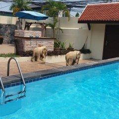 Отель Baan ViewBor Pool Villa 3* Вилла с различными типами кроватей фото 10