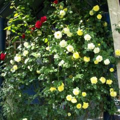 Отель Guest House on ul Davidashen 10 Армения, Ереван - отзывы, цены и фото номеров - забронировать отель Guest House on ul Davidashen 10 онлайн фото 12