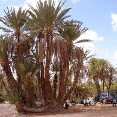 Отель Riad Kemkem Марокко, Мерзуга - отзывы, цены и фото номеров - забронировать отель Riad Kemkem онлайн пляж фото 2