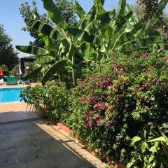 Green Peace Hotel Турция, Олудениз - 1 отзыв об отеле, цены и фото номеров - забронировать отель Green Peace Hotel онлайн