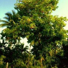 Отель Shiloh Ямайка, Каслтон - отзывы, цены и фото номеров - забронировать отель Shiloh онлайн фото 14
