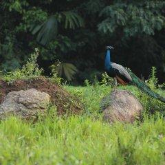 Отель Ella Jungle Resort Шри-Ланка, Бандаравела - отзывы, цены и фото номеров - забронировать отель Ella Jungle Resort онлайн фото 2