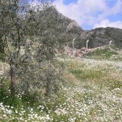 Отель Natureland Efes фото 5