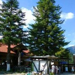 Отель Cabana Poiana Secuilor Румыния, Предял - отзывы, цены и фото номеров - забронировать отель Cabana Poiana Secuilor онлайн фото 2