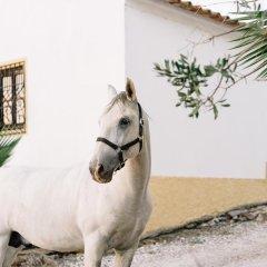 Отель Herdade D. Pedro с домашними животными