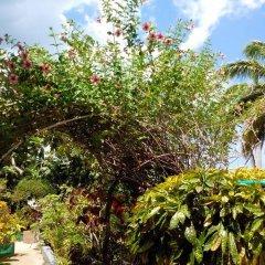 Отель Palm View Guesthouse And Conference Centre Монтего-Бей фото 8