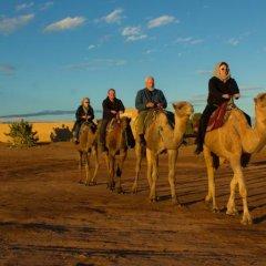 Отель Auberge Sahara Garden Марокко, Мерзуга - отзывы, цены и фото номеров - забронировать отель Auberge Sahara Garden онлайн пляж фото 2
