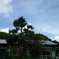 Tomarigi - Hostel Якусима фото 8